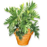 dépollution avec les plantes